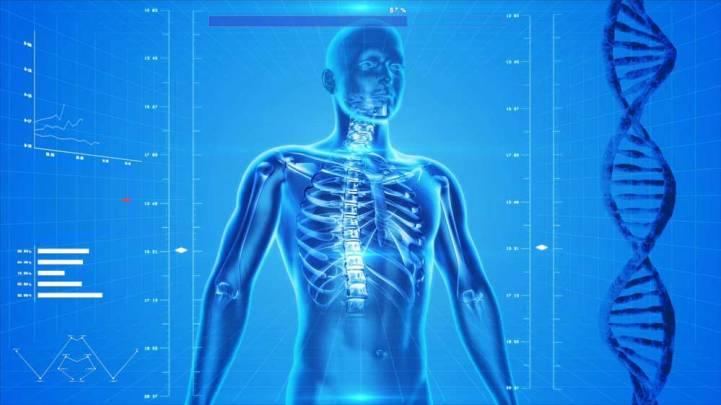 human-skeleton-163715-Web1