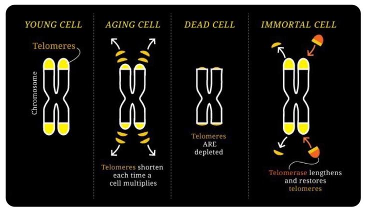 immortality2